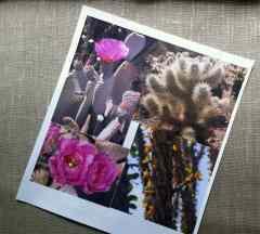 Cómo imprimir fotos y diseños sobre tela